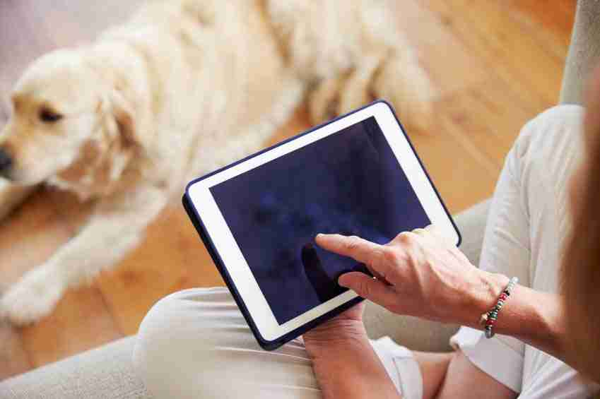 sistema de rastreamento para pets